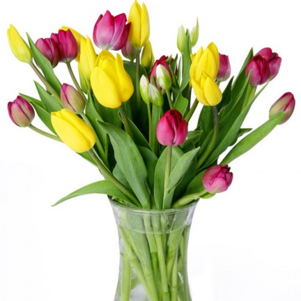 Tulips in Basic Vase