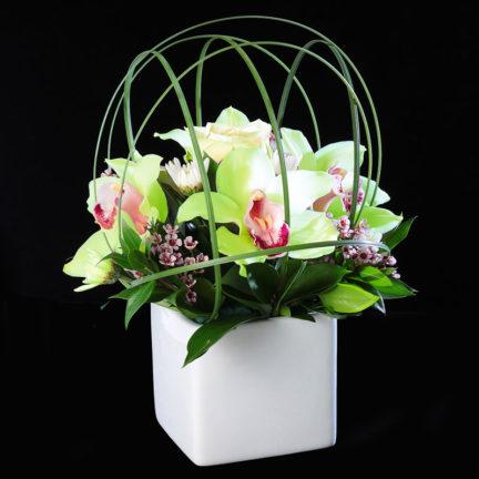 Terrarium of Orchids