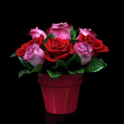 pink and red roses in a hot pink pot from Bloomers at the Market